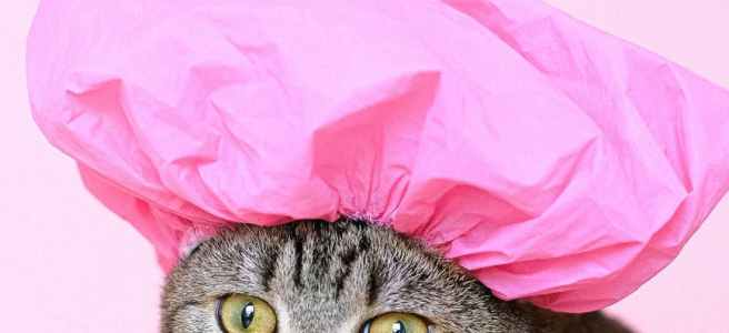 Cat in a pink shower hat