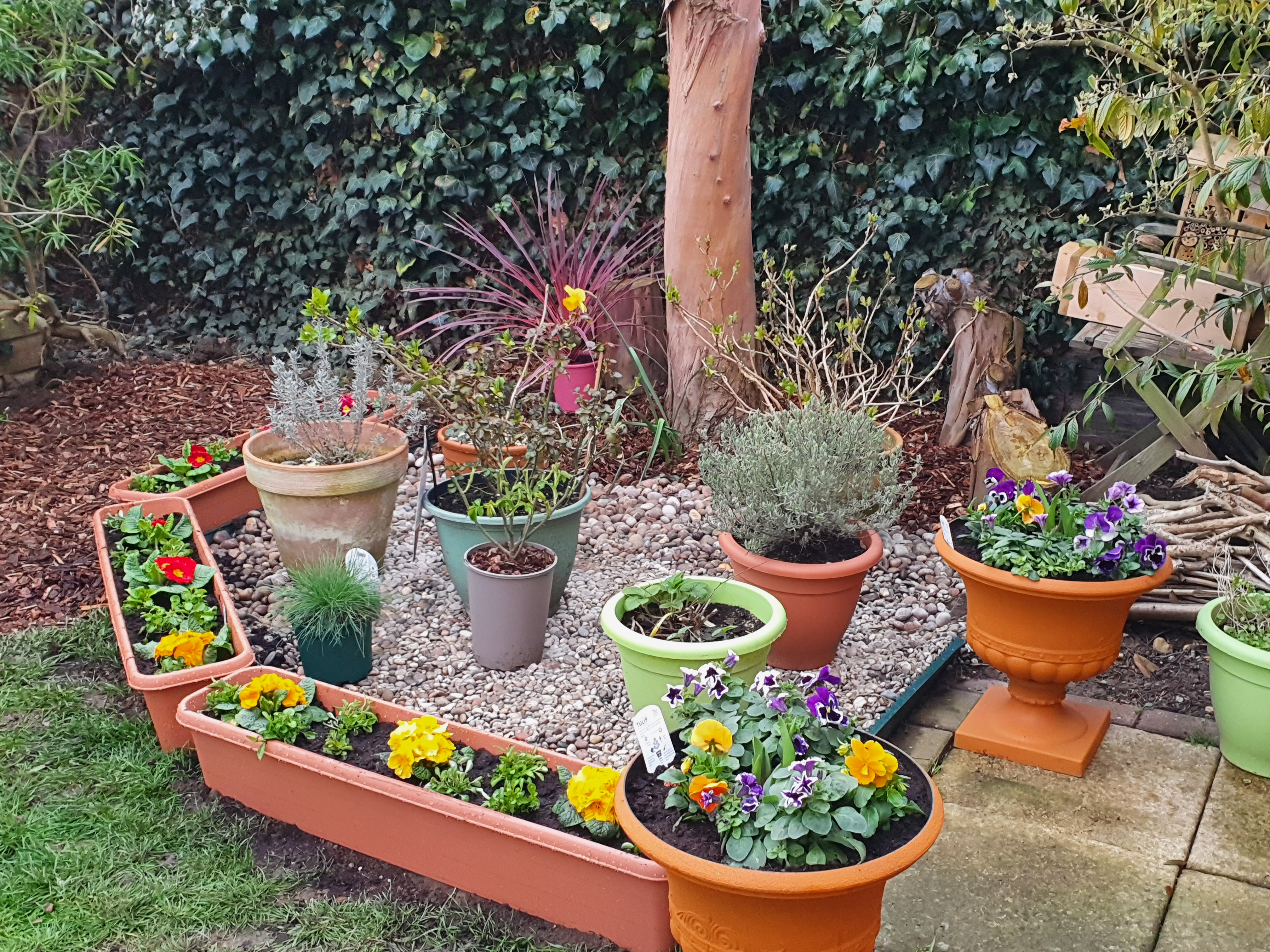 Shrubs varieties in pots on pebbles