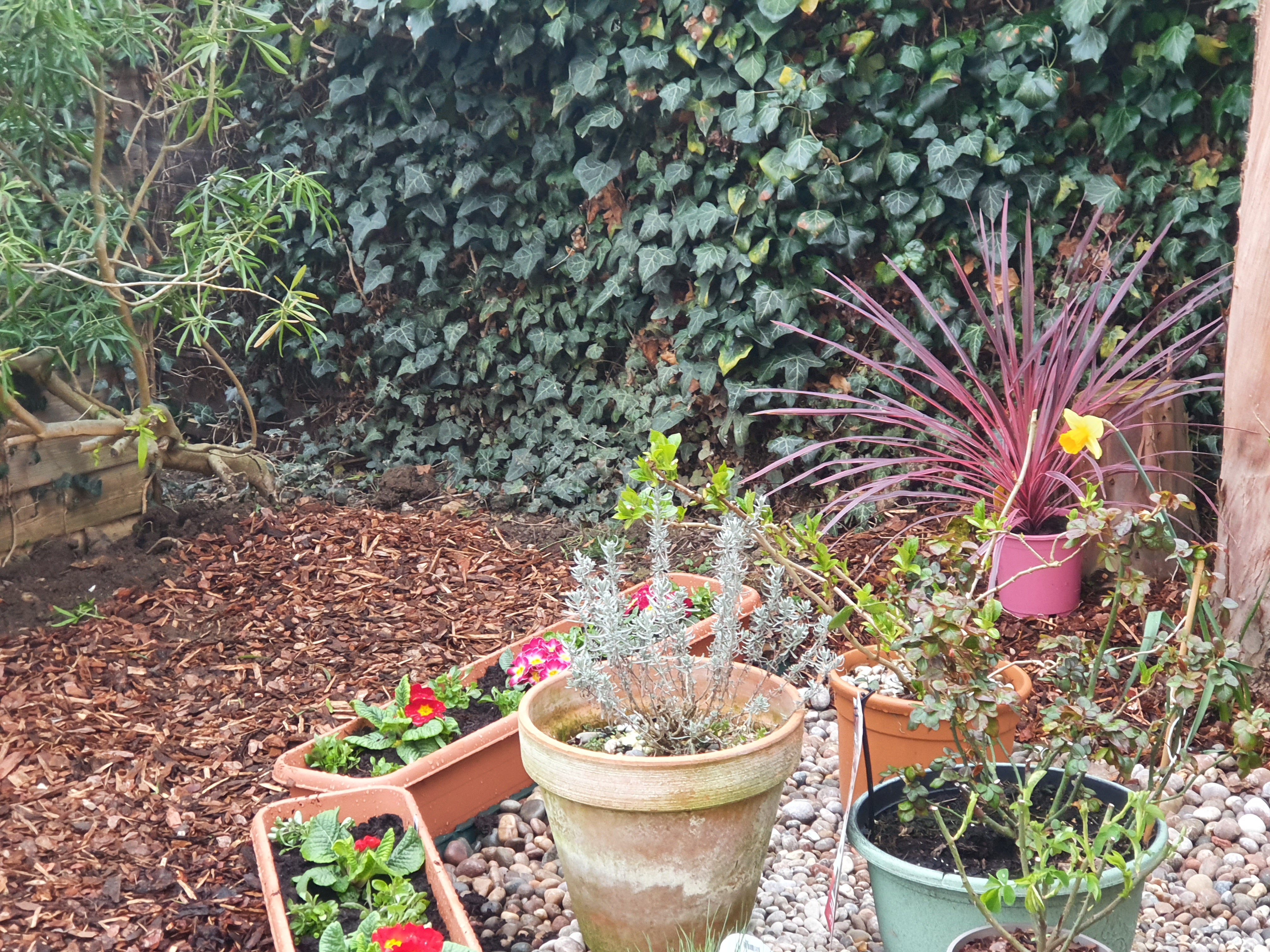Potted shrubs and wood chip