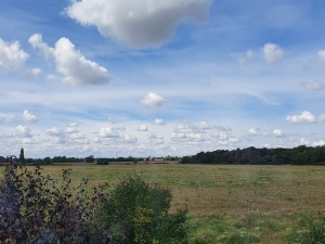 Field view, Blue sky with clouds