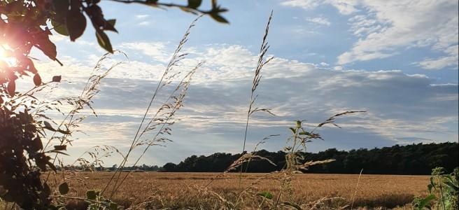 A field landscape